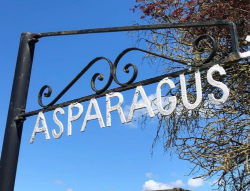 Pedal to your Produce #1: Eassie Asparagus Farm