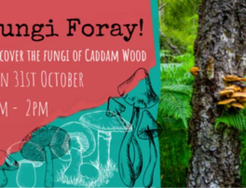 Fungi Foray at Caddam Wood